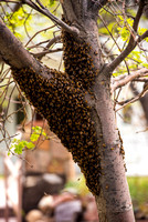 DLP_3324-Bees-WillowPondPhoto