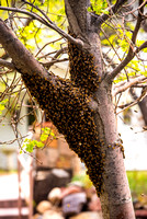 DLP_3322-Bees-WillowPondPhoto